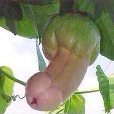 QiBest 30pcs/Bag Pumpkin Seeds Rare Melon Organic Vegetable Seeds Home Gar Flowers : Garden & Outdoor