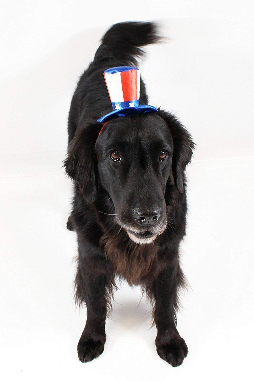 Midlee Uncle Sam 4th of July Hat for Large Dogs Headband by Midlee