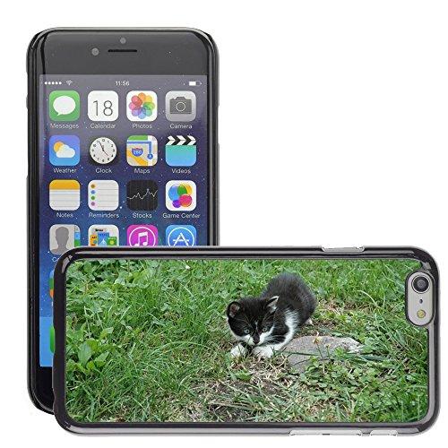 """Just Phone Cases Hard plastica indietro Case Custodie Cover pelle protettiva Per // M00128997 Cat Kitten Ludique Animaux Chat // Apple iPhone 6 PLUS 5.5"""""""