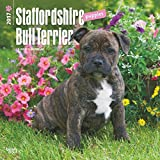 2017 Staffordshire Bull Terrier Puppies Wall Calendar Pups Puppy Dogs {jg} Best Holiday Gift Ideas - Great for mom, dad, sister, brother, grandparents, , grandchildren, grandma, gay, lgbtq.