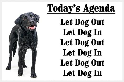 Negro Labrador Retriever perro divertido imán para nevera regalo ...