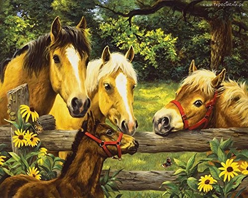 Dorara DIY Oil Painting Paint By Number Hand Paintworks 16×20 Inches Horses