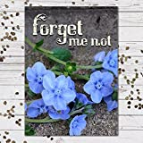 "Chinese Forget-Me-Not Seed Packet Favors (F07) ""Forget Me Not"""