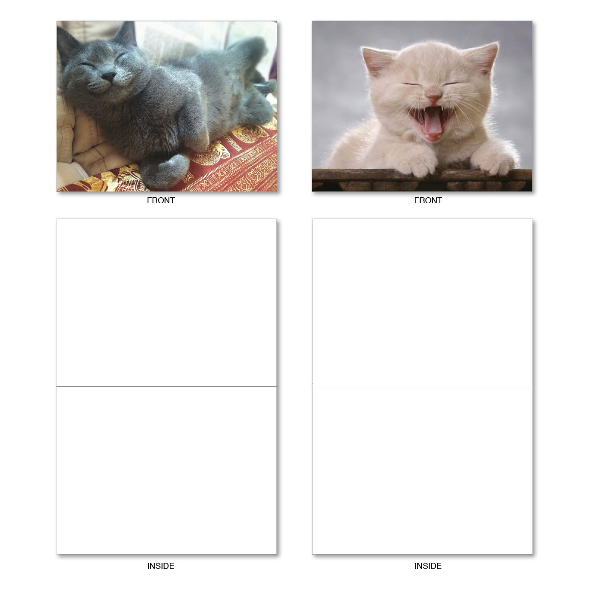 - Assorted Cat Smitten Kitten Blank Greeting Cards with Envelopes Box of 10 Kitten Themed Note Cards NobleWorks M6485OCB Adorable All Occasion Cat and Animal Stationery 4 x 5.12 inch