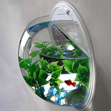Amazon Lovnely Wall Mounted Clear Fish Tank Plant Terrarium