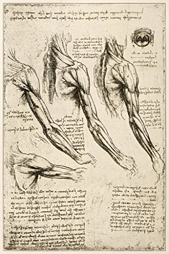 - Leonardos Sketches and Drawings Anatomy Arm Muscles Art Print Poster 12x18 inch