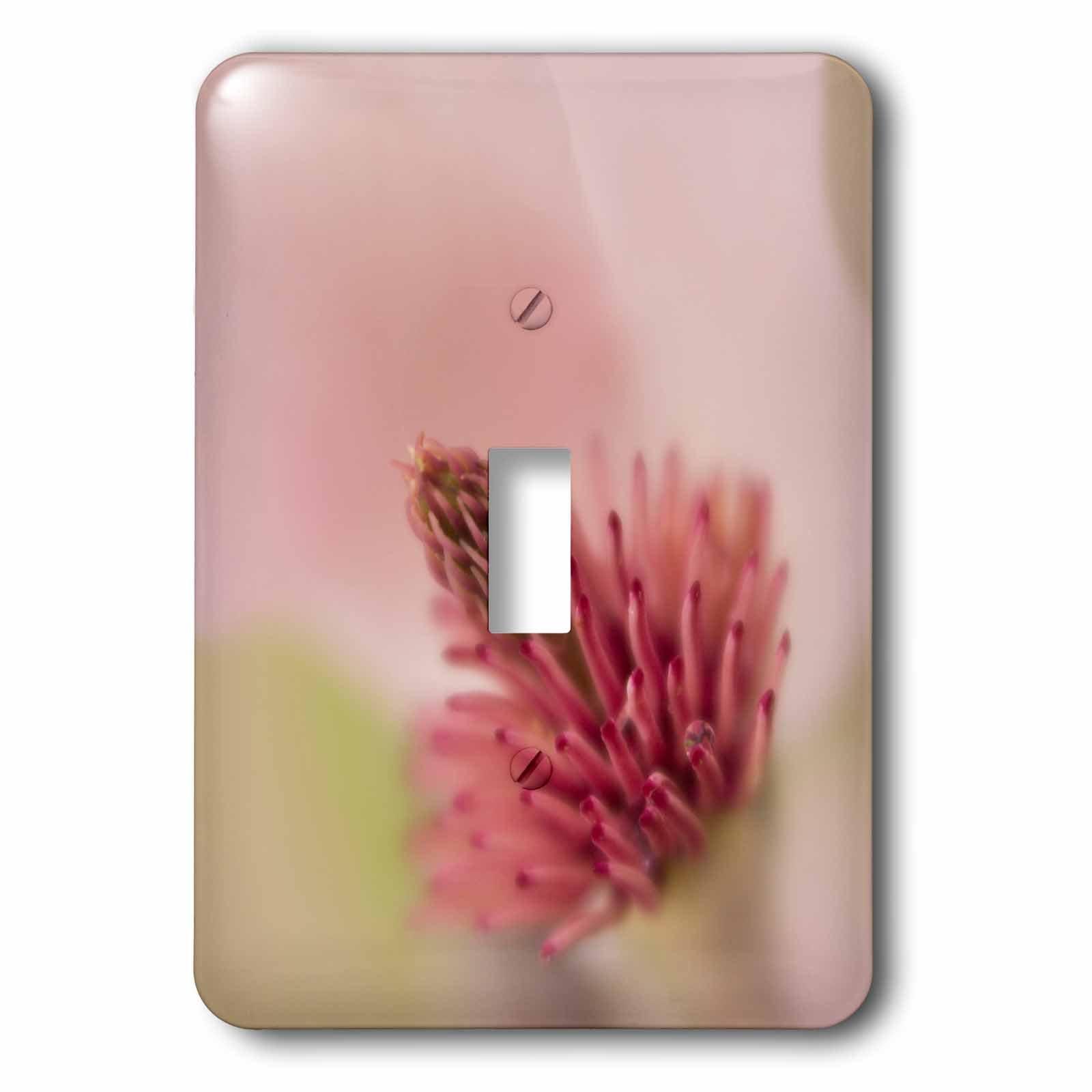 3dRose Danita Delimont - Flowers - USA, South Carolina, Charleston. Magnolia flower detail. - Light Switch Covers - single toggle switch (lsp_259973_1)