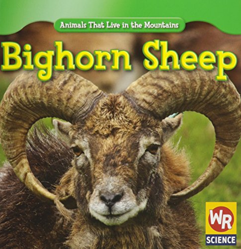 Bighorn Sheep (Animals That Live in the Mountains)