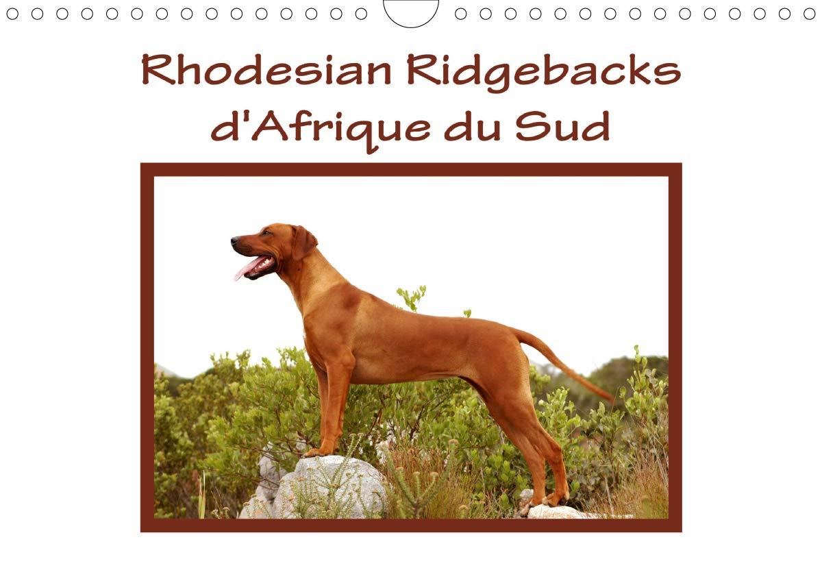 Rhodesian Ridgebacks d'Afrique du Sud 2020: Rhodesian Ridgebacks photographies par Anke van Wyk dans leur pays d'origine, l'Afrique du Sud.