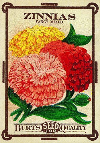 (Zinnias - Vintage Seed Packet (9x12 Art Print, Wall Decor Travel Poster))