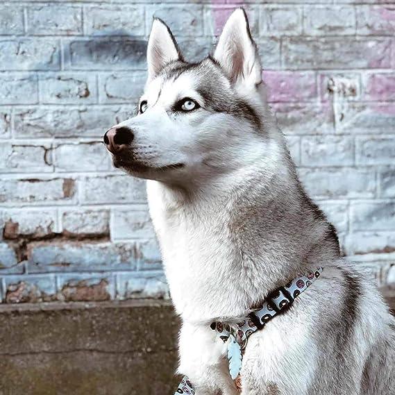 Dukier - Arnés clásico para Perro, Forma de H, cómodo, Ajustable y ...