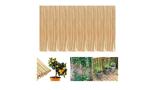 8 unidades 50 palos de bambú - Apoyo nuevas plantas - decorativa ...
