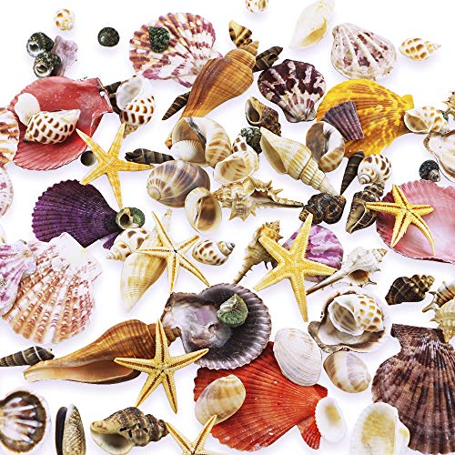 WFPLUS 200+pcs Sea Shells Mixed Ocean Beach Seashells, Various Sizes Natural Seashells Starfish for Fish Tank, Home Decorations, Beach Theme Party, Candle Making, Wedding Decor, DIY Crafts ()
