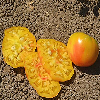 Tomato Garden Seeds - Mr. Stripey - Non-GMO, Heirloom, Vegetable Gardening Seed