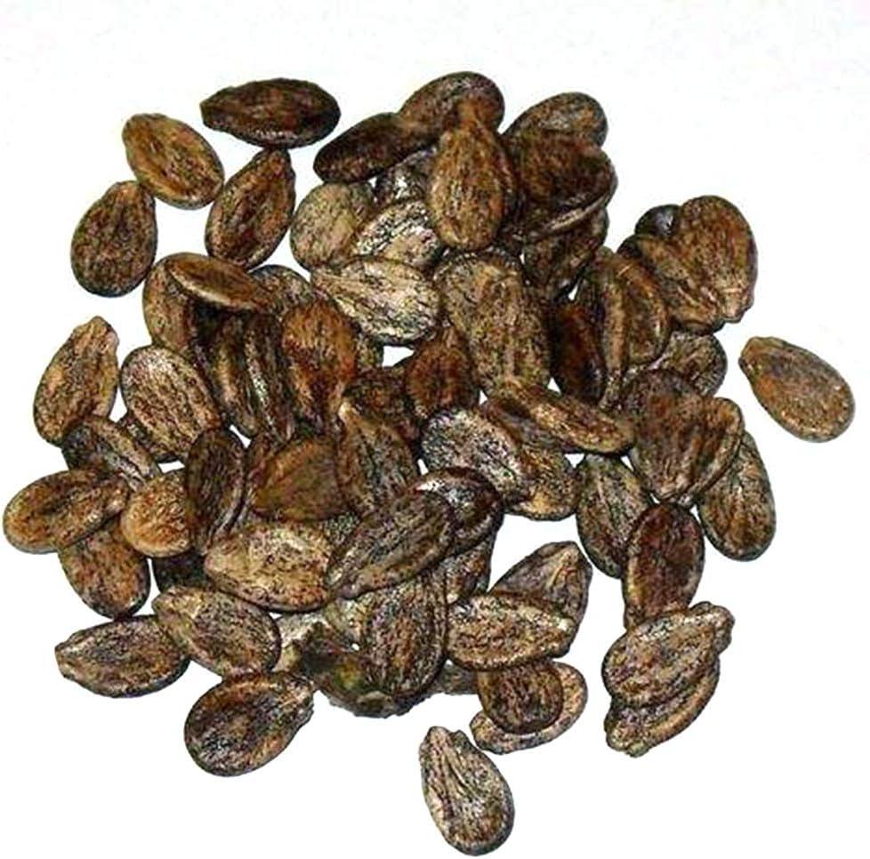 N/ A 10 piezas de semillas de sandía para plantar frutas, plantas, plantas, plantas, plantas, plantas, plantas de jardín