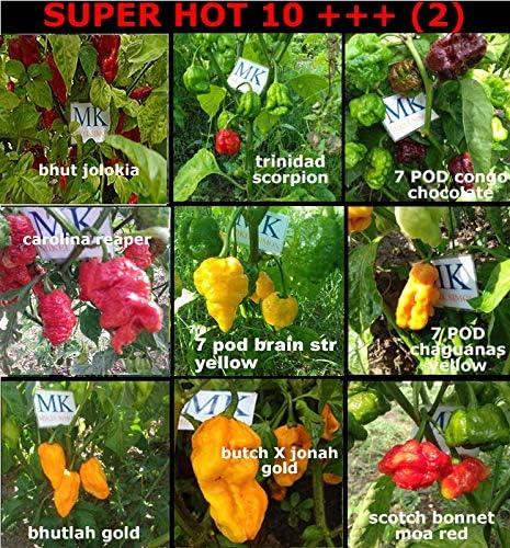 SUPER HOT 10+++, 9 chiles mas picantes del mundo, 90 semillas, pack(2): Amazon.es: Jardín