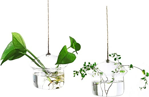 "4x Glass Hanging Air Plant Terrarium Vase 39/"" Sling Air Plant Miniature Gardens"