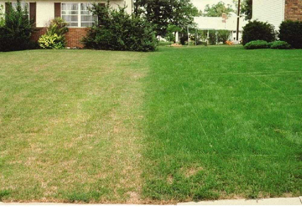 5kg Extreme Shade Drought Resistant Lawn Seed with Kentucky Bluegrass Grass for Dry Soil - 5 kg Supplied by Pretty Wild Seeds