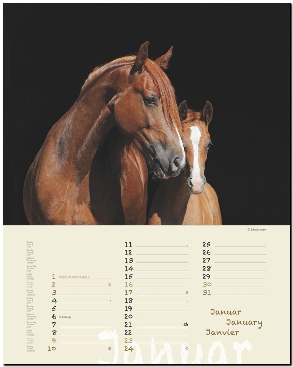 PFERDETRÄUME - Original Stürtz-Kalender 2016 - Hochformat-Kalender 36 x 45  cm mit Platz für Notizen Notiz-Kalender: Amazon.de: Sabine Stuewer: Bücher