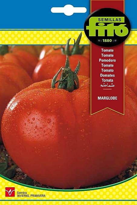 Semillas Fitó 292 - Semillas de Tomate Marglobe: Amazon.es: Jardín