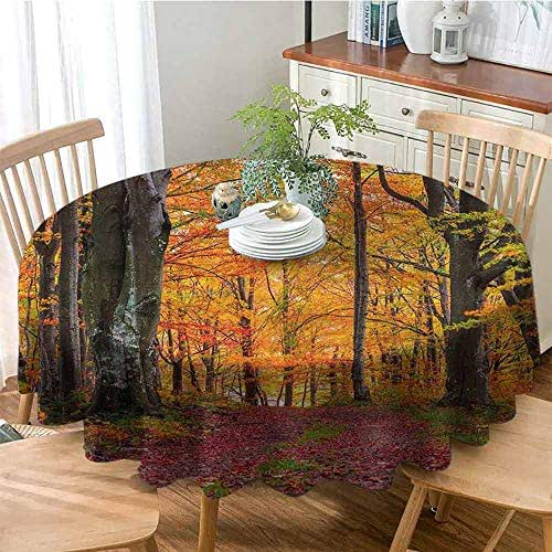 WinfreyDecor Autumn Spill-Proof Tablecloth Fall Forest with Shady Deciduous Trees and Faded Leaf Magic Woodland Picture Easy Care D47 Apricot Brown Red