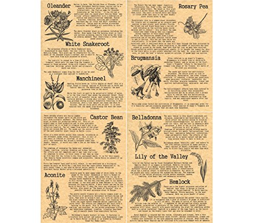 set-of-4-book-of-shadows-pages-on-poisonous-plants-wicca-witchcraft-like-charmed-gold