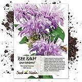 Seed Needs, Wild Bee Balm (Monarda fistulosa) 400 Seeds