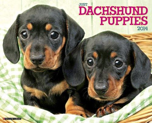 Just Dachshund Puppies 2014 Wall Calendar - Dogs 2014 Wall Calendar