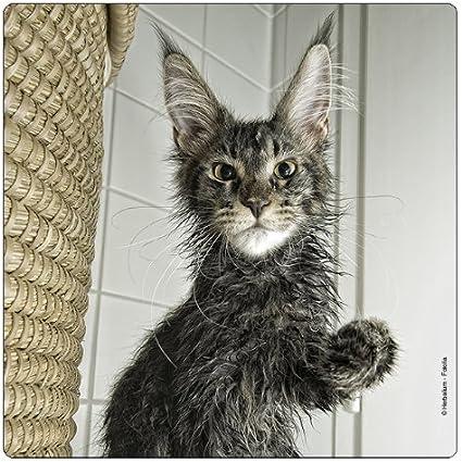 Katzen Kühlschrankmagnet Katze Magnet Magnetset Kater Tier Haustier Barhaare