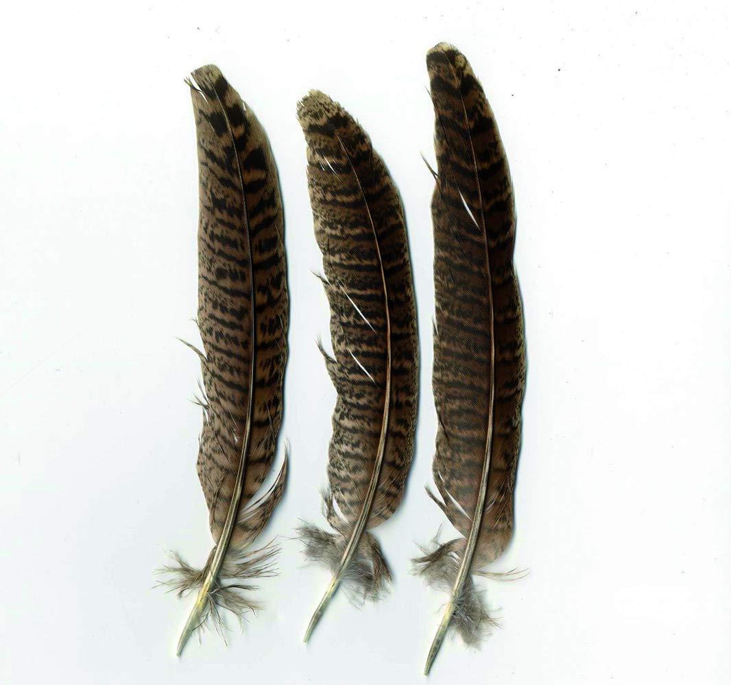 ca 24 Federn gegl/ättet B 14 cm Art/émio Federn-Natur