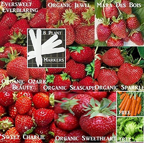 bulk-8-strawberry-seeds-survival-seeds-1500-seeds-upc-646263360774-8-plant-markers-organic-heirloom