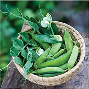 David's Garden Seeds Pea Sugar Ann SL5594 (Green) 100 Non-GMO, Heirloom Seeds