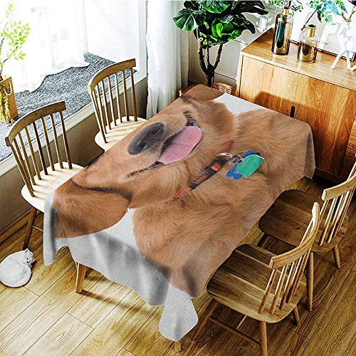Golden Retriever Easy to Care for Leakproof and Durable Long tablecloths Portrait of Young Pedigreed Dog Wearing a Collar and Tags Domestic Animal Outdoor Picnic W60 x L84 Inch Multicolor ()