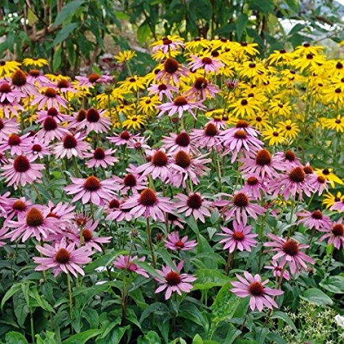 Organic Dried Echinacea purpurea Leaf (10 Lbs) by Dirt Goddess Super Seeds (Image #1)