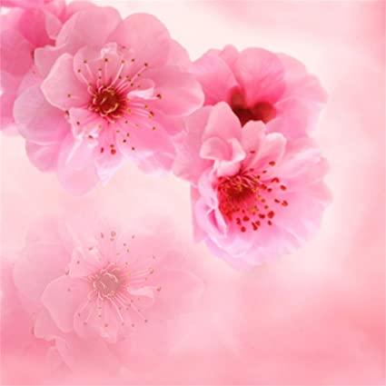 Amazon Com Aofoto 10x10ft Spring Flowers Backdrop Sweet Pink