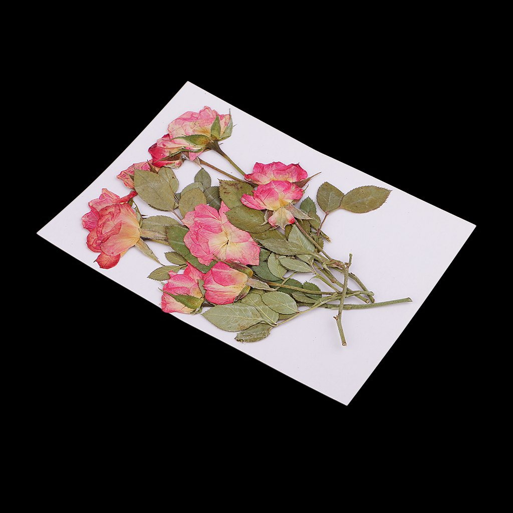 20//40 Piezas Flores Secas Prensadas Verdaderas para Fabricaci/ón de Proyectos de Manualidades 20 piezas-1