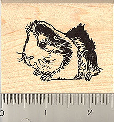 Tricolor Abyssinian Guinea Pig Rubber Stamp