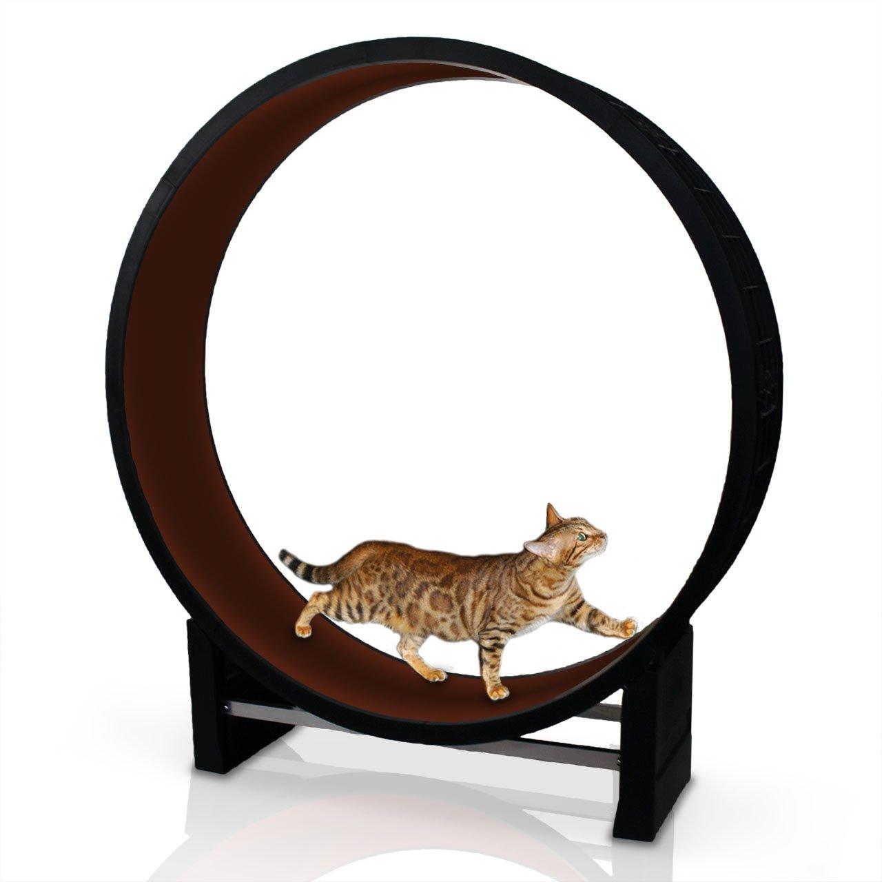 CanadianCat Company ® | Katzenlaufrad | Cat in Motion | Kastanienbraun | Trainingsgerät und Spielzeug für Katzen