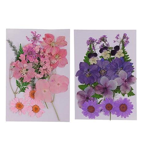 Getrocknete Blumenblätter Gemischte Natürliche Gepresste Getrocknete