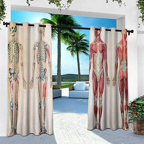 Hengshu Human Anatomy, Patio Curtains,Vintage Chart of Body Front Back Skeleton and Muscle System Bone Mass Graphic, W108 x L84 Inch, Ruby Cream