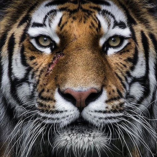 Fairylove 30×30 Diamond Painting Full Tiger Paint with Diam