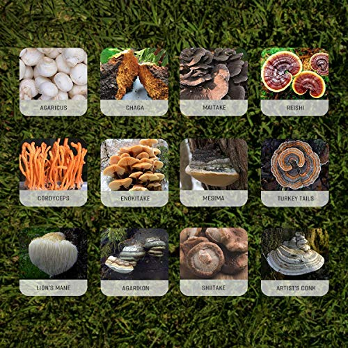 Dozen Mushroom Immune Support 100 Capsules (Agaricus, Chaga, Agarikon, Lion's Mane, Turkey Tails, Maitake, Reishi, Cordyceps, Enokitake, Mesima, Shiitake, Artist's Conk)