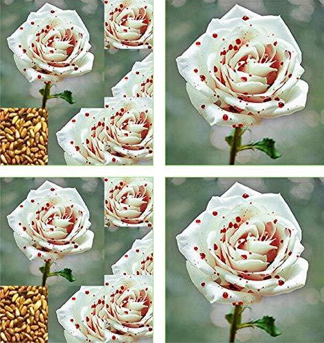 - 100pcs Beautiful White Drops of Blood Rose Seeds Garden Beautiful Balcony