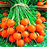 buy Seeds Sweet Carrot Paris Market Red Organic Heirloom Ukraine for Planting now, new 2020-2019 bestseller, review and Photo, best price $6.99