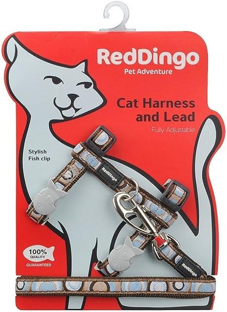 Red Dingo - Arnés para Gato y Combo de Plomo: Amazon.es: Productos ...