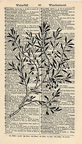 - BOTANICAL ARTWORK - OLIVE BRANCH ART PRINT - NATURE ART PRINT - VINTAGE Art - Illustration - GIFT - Vintage Dictionary Art Print - Wall Hanging - Book Print 213B ()