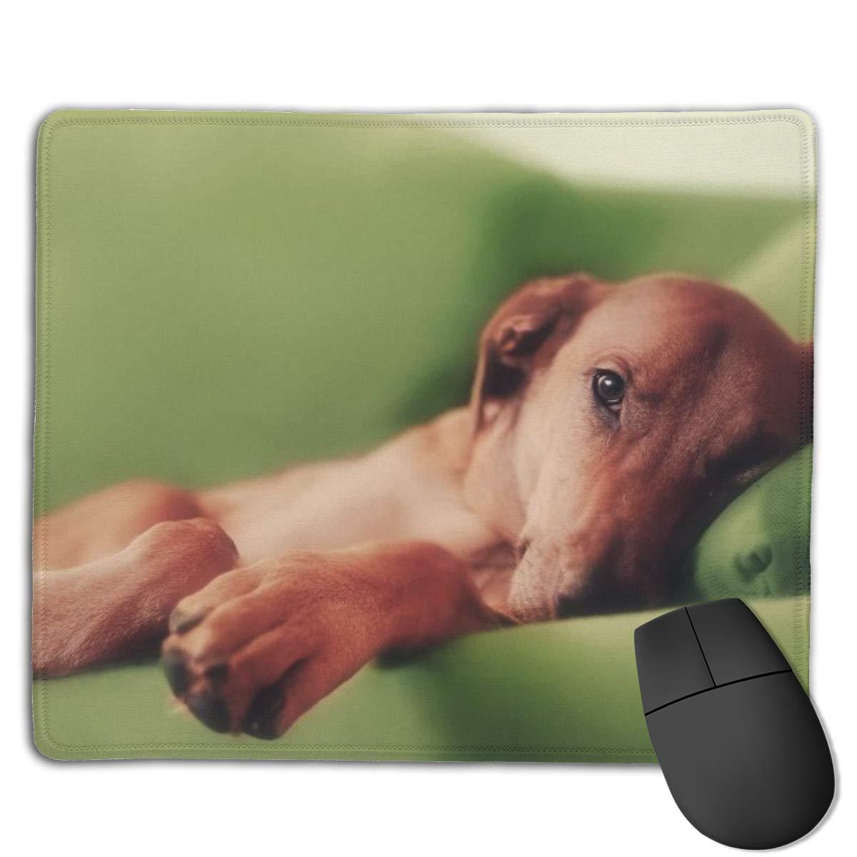 af4fb9f1156c Amazon.com: FriendEver Lazy Dog Mouse Pads,Non Slip Mouse Mat Pad ...