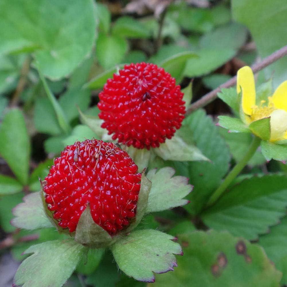 500 Pcs Wild Strawberry Seeds