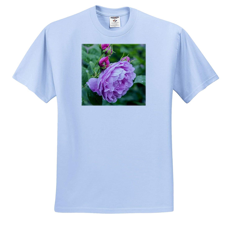 ts/_313920 Flowers - Adult T-Shirt XL 3dRose Danita Delimont Pink Rose Bush Closeup