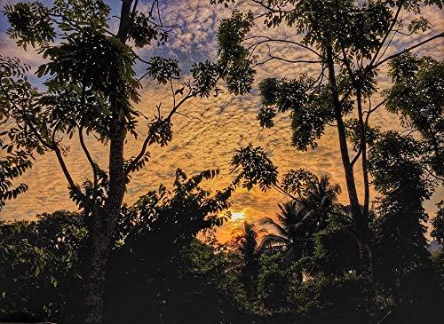 (Home Comforts Peel-n-Stick Poster of Sunrise Dawn Twilight Jungle Dusk Tree Landscape Vivid Imagery Poster 24 x 16 Adhesive Sticker Poster Print)
